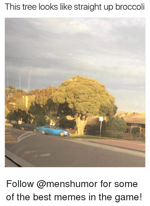 Funny, Meme, and Memes: This tree looks like straight up broccoli Follow @menshumor for some of the best memes in the game!