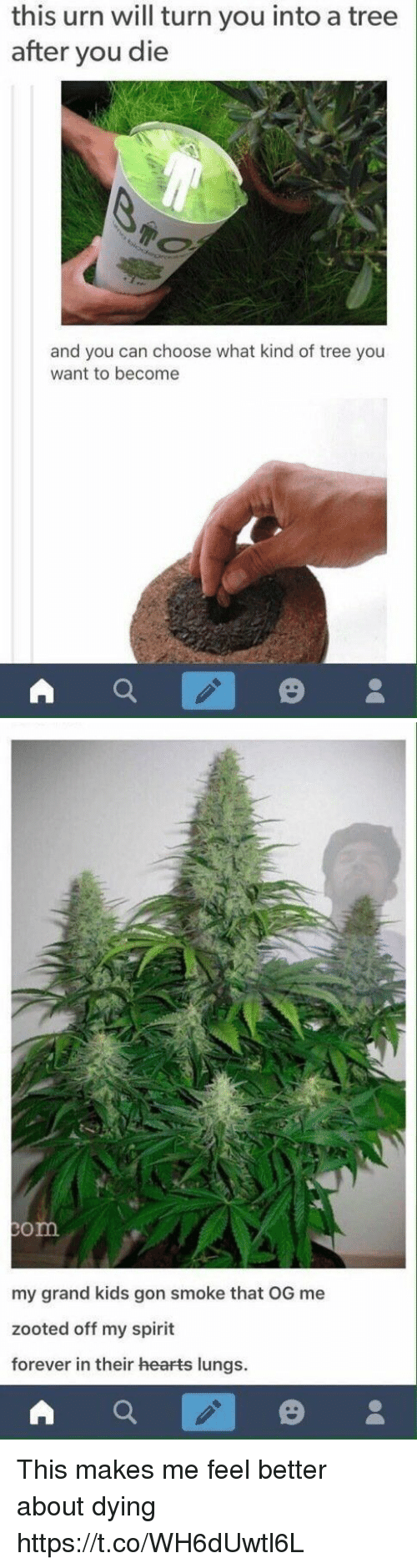 Zooted: this urn will turn you into a tree  after you die  and you can choose what kind of tree you  want to become   om  my grand kids gon smoke that OG me  zooted off my spirit  forever in their hearts lungs. This makes me feel better about dying https://t.co/WH6dUwtl6L