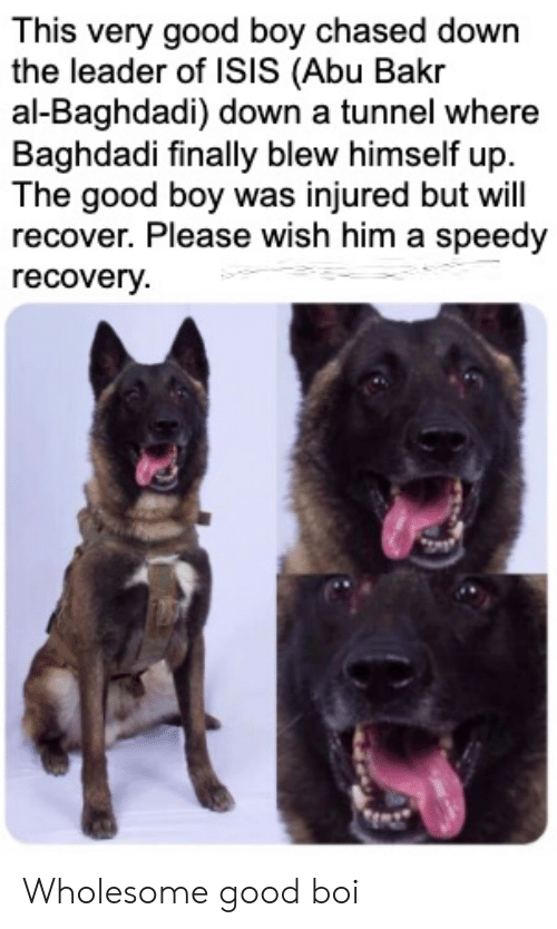 Isis, Good, and Wholesome: This very good boy chased down  the leader of ISIS (Abu Bakr  al-Baghdadi) down a tunnel where  Baghdadi finally blew himself up  The good boy was injured but will  recover. Please wish him a speedy  recovery Wholesome good boi