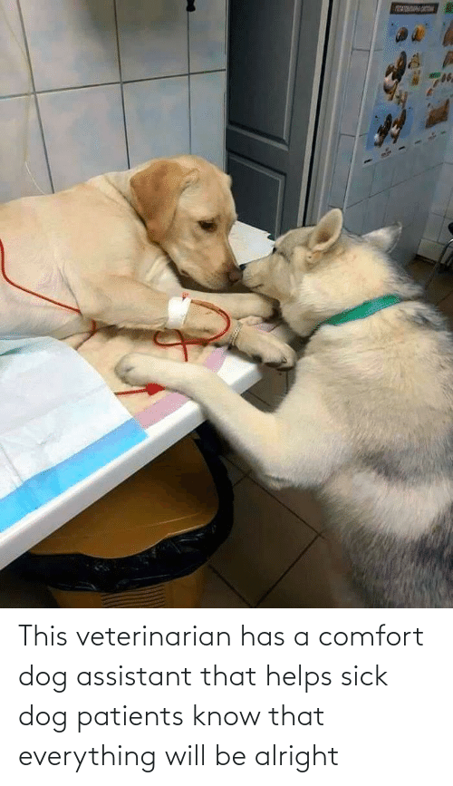 Alright: This veterinarian has a comfort dog assistant that helps sick dog patients know that everything will be alright