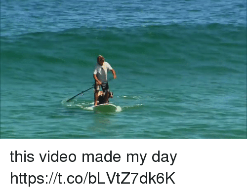 Video, Girl Memes, and Day: this video made my day https://t.co/bLVtZ7dk6K