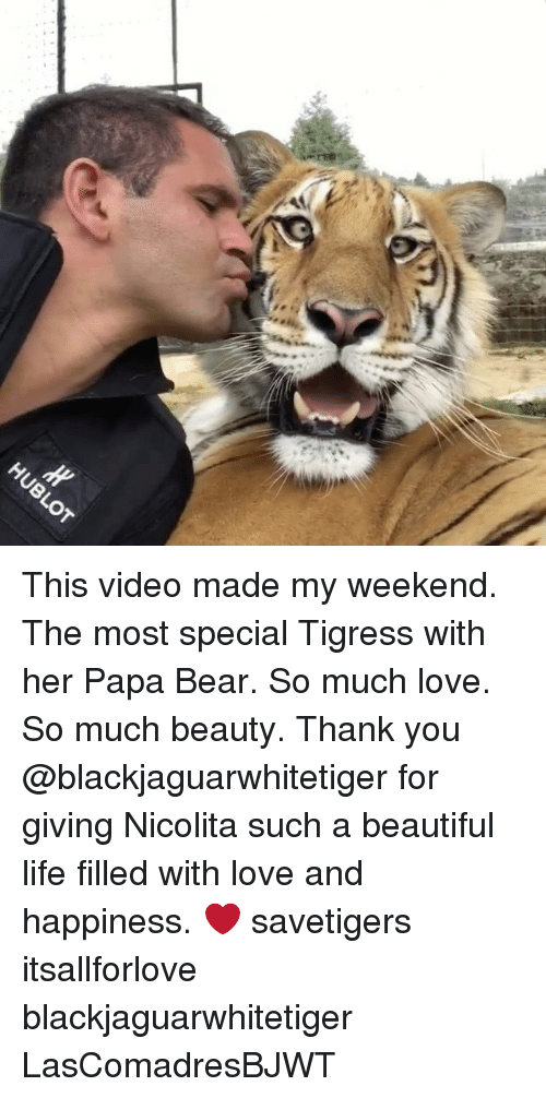 papa bear: This video made my weekend. The most special Tigress with her Papa Bear. So much love. So much beauty. Thank you @blackjaguarwhitetiger for giving Nicolita such a beautiful life filled with love and happiness. ❤️ savetigers itsallforlove blackjaguarwhitetiger LasComadresBJWT