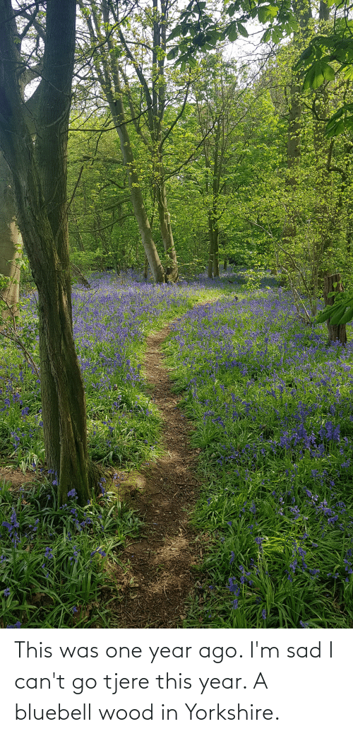 Im Sad: This was one year ago. I'm sad I can't go tjere this year. A bluebell wood in Yorkshire.