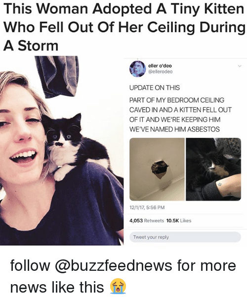 asbestos: This Woman Adopted A Tiny Kitten  Who Fell Out Of Her Ceiling During  A Storm  eller o'dedo  @ellerodeo  UPDATE ON THIS  PART OF MY BEDROOM CEILING  CAVED IN AND A KITTEN FELL OUT  OF IT AND WE'RE KEEPING HIM  WE'VE NAMED HIM ASBESTOS  12/1/17, 5:56 PM  4,053 Retweets 10.5K Likes  Tweet your reply follow @buzzfeednews for more news like this 😭