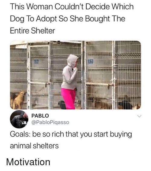Goals, Memes, and Animal: This Woman Couldn't Decide Which  Dog To Adopt So She Bought The  Entire Shelter  4117  PABLO  @PabloPiqasso  Goals: be so rich that you start buying  animal shelters Motivation