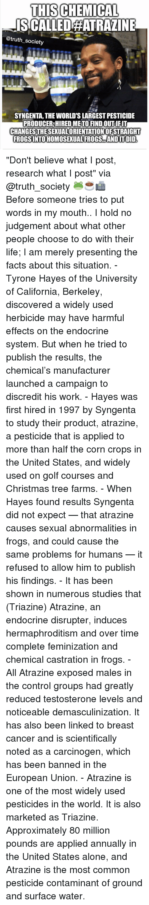 """syngenta: THISCHEMICAL  ISCALLEDAATRAZINE  Cotruth society  SYNGENTA, THE WORLDSLARGESTPESTICIDE  PRODUCER HIRED METO FIND OUT IFIT  CHANGES THESEXUALORIENTATIONOFSTRAIGHT  FROGSINTO HOMOSEXUAL FROGS ANDIT ITDID """"Don't believe what I post, research what I post"""" via @truth_society 🐸☕️📠 ・・・ Before someone tries to put words in my mouth.. I hold no judgement about what other people choose to do with their life; I am merely presenting the facts about this situation. - Tyrone Hayes of the University of California, Berkeley, discovered a widely used herbicide may have harmful effects on the endocrine system. But when he tried to publish the results, the chemical's manufacturer launched a campaign to discredit his work. - Hayes was first hired in 1997 by Syngenta to study their product, atrazine, a pesticide that is applied to more than half the corn crops in the United States, and widely used on golf courses and Christmas tree farms. - When Hayes found results Syngenta did not expect — that atrazine causes sexual abnormalities in frogs, and could cause the same problems for humans — it refused to allow him to publish his findings. - It has been shown in numerous studies that (Triazine) Atrazine, an endocrine disrupter, induces hermaphroditism and over time complete feminization and chemical castration in frogs. - All Atrazine exposed males in the control groups had greatly reduced testosterone levels and noticeable demasculinization. It has also been linked to breast cancer and is scientifically noted as a carcinogen, which has been banned in the European Union. - Atrazine is one of the most widely used pesticides in the world. It is also marketed as Triazine. Approximately 80 million pounds are applied annually in the United States alone, and Atrazine is the most common pesticide contaminant of ground and surface water."""