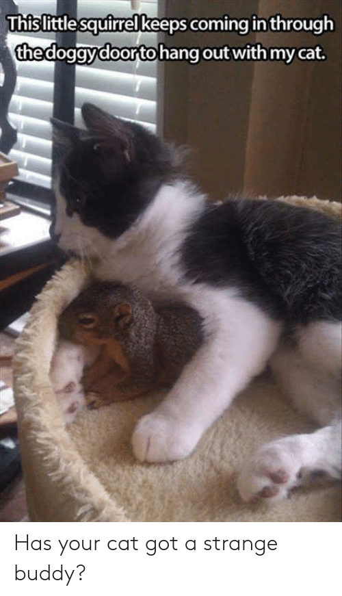 Coming In: Thislittle squirrel keeps coming in through  thedogavdoorto hang out with my cat Has your cat got a strange buddy?