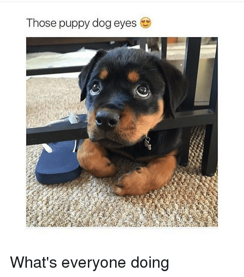 Dogs, Puppies, and Puppy: Those puppy dog eyes What's everyone doing