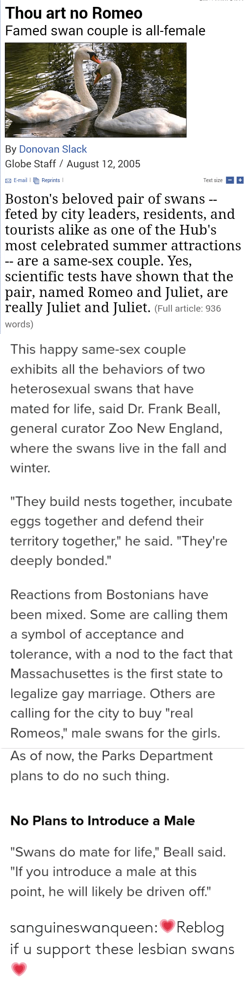 """Thou Art: Thou art no Romeo  Famed swan couple is all-female  By Donovan Slack  Globe Staff August 12, 2005    E-mail Reprints  Text size  Boston's beloved pair of swans -  feted by city leaders, residents, and  tourists alike as one of the Hub's  most celebrated summer attractions  - are a same-sex couple. Yes,  scientific tests have shown that the  pair, named Romeo and Juliet, are  really Juliet and Juliet. (Full article: 936  words)   This happy same-sex couple  exhibits all the behaviors of two  heterosexual swans that have  mated for life, said Dr. Frank Beall,  general curator Zoo New England,  where the swans live in the fall and  winter.  """"They build nests together, incubate  eggs together and defend their  territory together,"""" he said. """"They're  deeply bonded.""""   Reactions from Bostonians have  been mixed. Some are calling them  a symbol of acceptance and  tolerance, with a nod to the fact that  Massachusettes is the first state to  legalize gay marriage. Others are  calling for the city to buy """"real  Romeos,"""" male swans for the girls.   As of now, the Parks Department  plans to do no such thing.  No Plans to Introduce a Male  """"Swans do mate for life,"""" Beall said.  """"If you introduce a male at this  point, he will likely be driven off."""" sanguineswanqueen:💗Reblog if u support these lesbian swans 💗"""