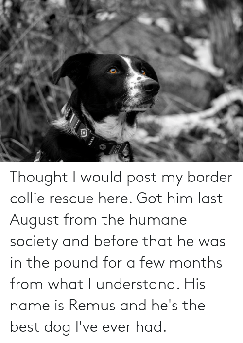 Would Post: Thought I would post my border collie rescue here. Got him last August from the humane society and before that he was in the pound for a few months from what I understand. His name is Remus and he's the best dog I've ever had.