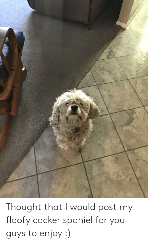 Would Post: Thought that I would post my floofy cocker spaniel for you guys to enjoy :)