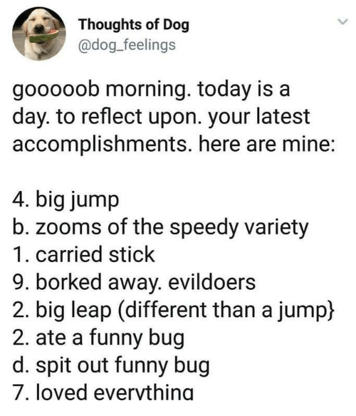 Borked: Thoughts of Dog  @dog_feelings  gooooob morning. today is a  day. to reflect upon. your latest  accomplishments. here are mine:  4. big jump  zooms of the speedy variety  1. carried stick  9. borked away. evildoers  2. big leap (different than a jump)  2. ate a funny bug  d. spit out funny bug  7, loved evervthing