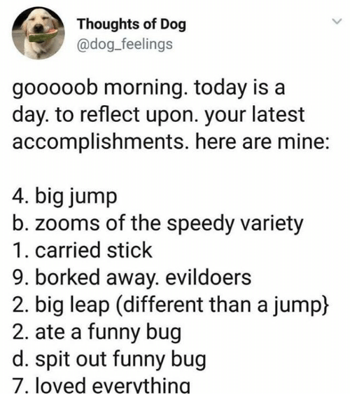Borked: Thoughts of Dog  @dog_feelings  gooooob morning. today is a  day. to reflect upon. your latest  accomplishments. here are mine:  4. big jump  b. zooms of the speedy variety  1. carried stick  9. borked away. evildoers  2. big leap (different than a jump)  2. ate a funny bug  d. spit out funny bug  7, loved evervthing