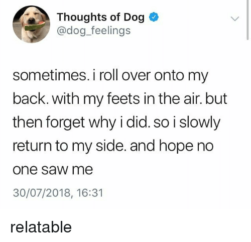 feets: Thoughts of Dog  @dog_feelings  sometimes. i roll over onto my  back. with my feets in the air. but  then forget why i did. so i slowly  return to my side. and hope no  one saw me  30/07/2018, 16:31 relatable