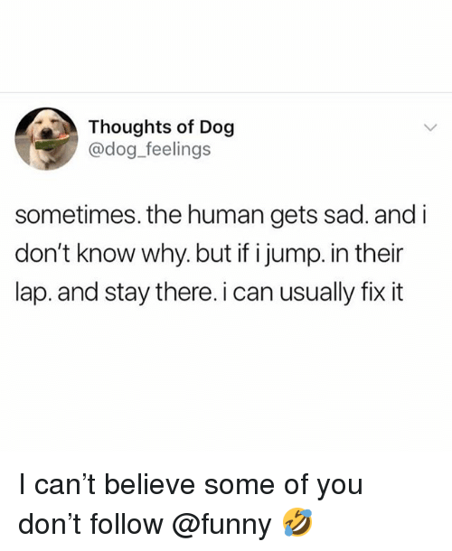 Funny, Meme, and Sad: Thoughts of Dog  @dog feelings  sometimes. the human gets sad. and i  don't know why. but if i jump. in their  lap. and stay there. i can usually fix it I can't believe some of you don't follow @funny 🤣