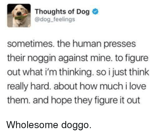 Love, Wholesome, and Figure It Out: Thoughts of Dog  @dog feelings  sometimes. the human presses  their noggin against mine. to figure  out what i'm thinking. so i just think  really hard. about how much i love  them. and hope they figure it out Wholesome doggo.
