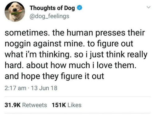 Funny, Love, and Tumblr: Thoughts of Dog  @dog_feelings  sometimes. the human presses their  noggin against mine. to figure out  what i'm thinking. so i just think really  hard. about how much i love them.  and hope they figure it out  2:17 am 13 Jun 18  31.9K Retweets  151K Likes