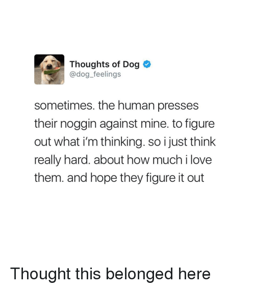 Love, Figure It Out, and Hope: Thoughts of Dog  @dog_feelings  sometimes. the human presses  their noggin against mine. to figure  out what i'm thinking. so i just think  really hard. about how much i love  them. and hope they figure it out Thought this belonged here