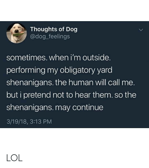 shenanigans: Thoughts of Dog  @dog_feelings  sometimes. when i'm outside.  performing my obligatory yard  shenanigans. the human will call me.  but i pretend not to hear them.so the  shenanigans. may continue  3/19/18, 3:13 PM LOL