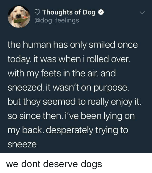 feets: Thoughts of Dog  @dog_feelings  the human has only smiled once  today. it was when i rolled over.  with my feets in the air. and  sneezed. it wasn't on purpose  but they seemed to really enjoy it.  so since then. i've been lying on  my back. desperately trying to  sneeze we dont deserve dogs