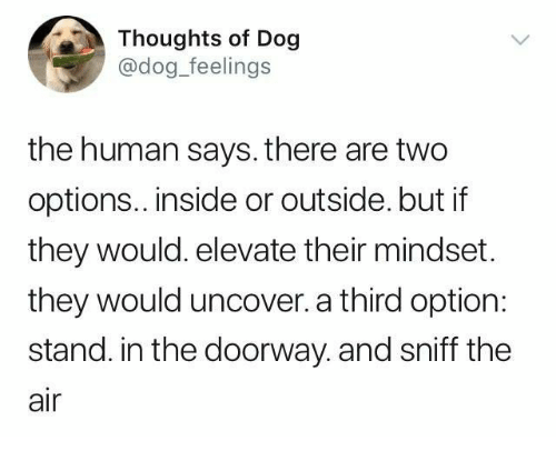 Dog, Human, and Air: Thoughts of Dog  @dog_feelings  the human says. there are two  options.. inside or outside. but if  they would. elevate their mindset.  they would uncover. a third option:  stand. in the doorway. and sniff the  air