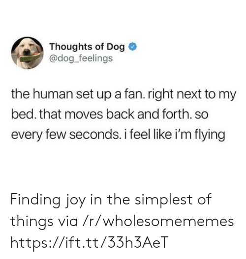 im flying: Thoughts of Dog  @dog_feelings  the human set up a fan. right next to my  bed. that moves back and forth. so  every few seconds. i feel like i'm flying Finding joy in the simplest of things via /r/wholesomememes https://ift.tt/33h3AeT