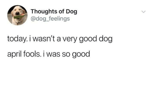 Good, Today, and April Fools: Thoughts of Dog  @dog_feelings  today. i wasn't a very good dog  april fools. i was so good