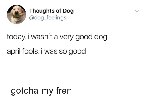 Good, Today, and April Fools: Thoughts of Dog  @dog_feelings  today.i wasn't a very good dog  april fools. i was so good <p>I gotcha my fren</p>
