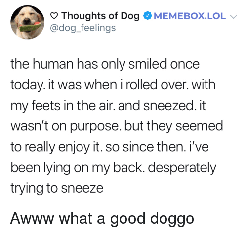 feets: Thoughts of Dog OMEMEBOX.LOL  @dog_feelings  the human has only smiled once  today. it was when irolled over. with  my feets in the air. and sneezed. it  wasn't on purpose. but they seemed  to really enjoy it. so since then. i've  been lying on my back. desperately  trying to sneeze Awww what a good doggo