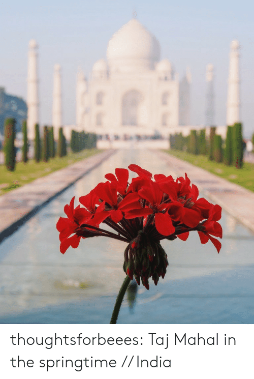 Springtime: thoughtsforbeees:  Taj Mahal in the springtime // India