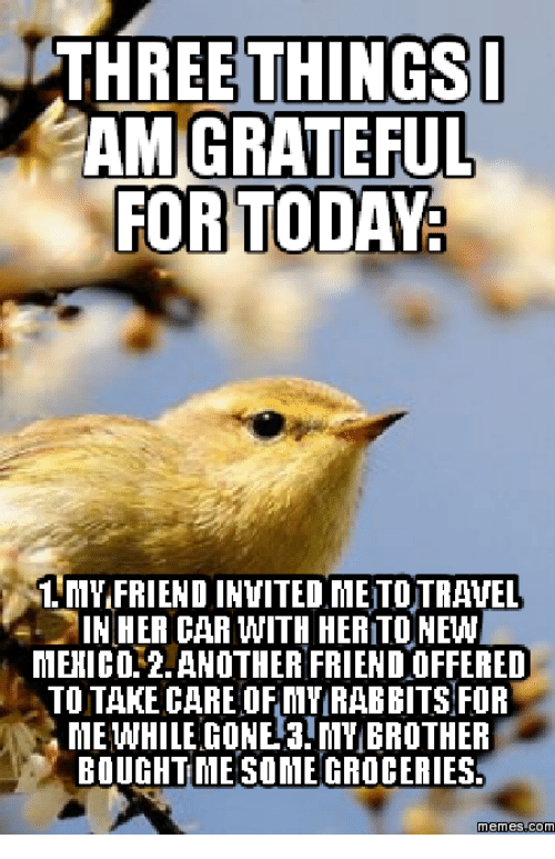 Grateful Dead Meme: THREE THINGS I  AM GRATEFUL  FOR TODAY  1. MVIFRIEND INVITED MEITOTRANEL  IN HER CAR WITH HERITONEW  MEHICO ANOTHER FRIENDOFFERED  TO TAKE CARE OF MY RABBITS FOR  MEWHILE GONE 3 MY BROTHER  BOUGHT MESOMEGROCERIES  Memes