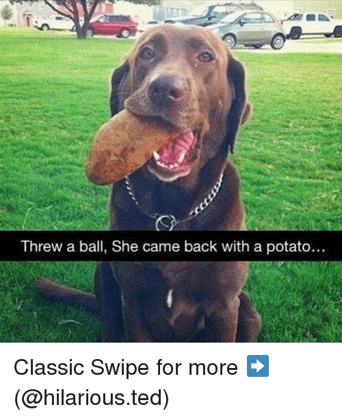 Funny, Ted, and Potato: Threw a ball, She came back with a potato.. Classic Swipe for more ➡ (@hilarious.ted)