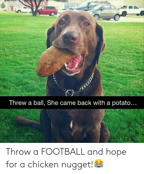 nugget: Threw a ball, She came back with a potato.... Throw a FOOTBALL and hope for a chicken nugget!😂