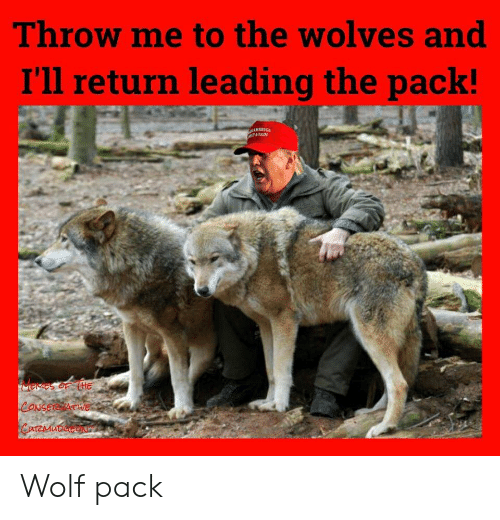 wolf pack: Throw me to the wolves and  I'll return leading the pack!  Memes oF (HE  CONSERE ATWE  CurZMuDaceN Wolf pack