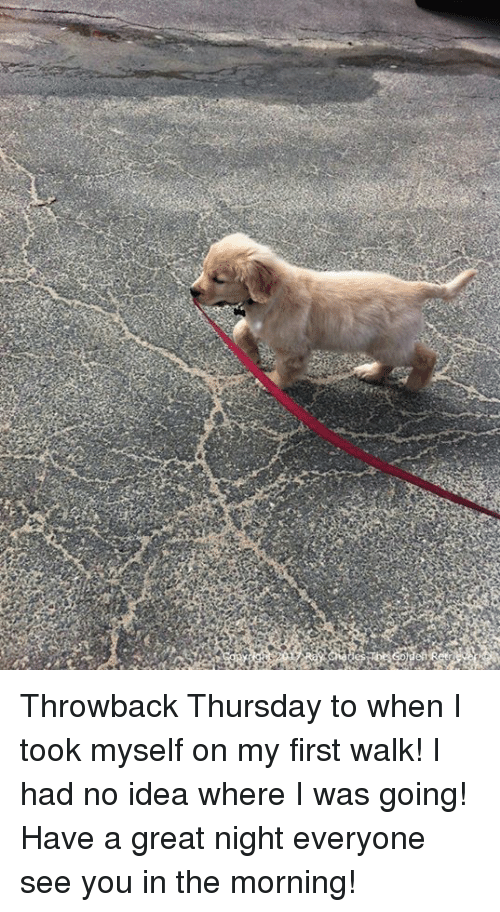 Throwback Thursday: Throwback Thursday to when I took myself on my first walk! I had no idea where I was going! Have a great night everyone see you in the morning!