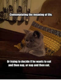 Contemplating The Meaning Of Life