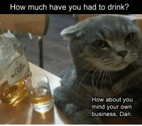 How Much Have You Had To Drink