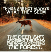 Things Are Not Always What They Seem