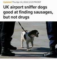 Good Doggo