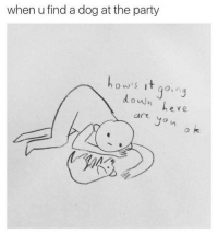 Dog At The Party