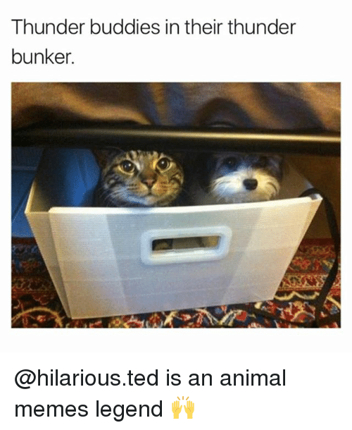 Memes, Ted, and Animal: Thunder buddies in their thunder  bunker.  g. @hilarious.ted is an animal memes legend 🙌