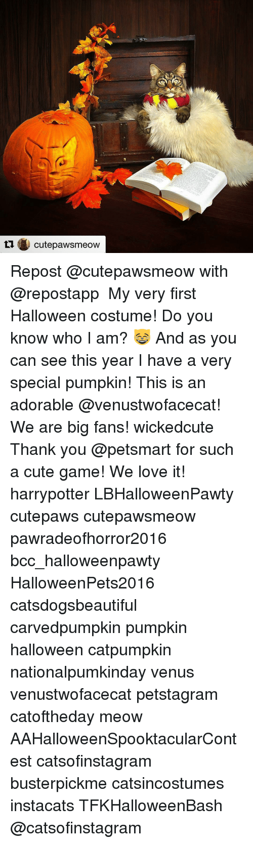 Pumpkins Halloween: ti Cute pawsmeow Repost @cutepawsmeow with @repostapp ・・・ My very first Halloween costume! Do you know who I am? 😸 And as you can see this year I have a very special pumpkin! This is an adorable @venustwofacecat! We are big fans! wickedcute Thank you @petsmart for such a cute game! We love it! harrypotter LBHalloweenPawty cutepaws cutepawsmeow pawradeofhorror2016 bcc_halloweenpawty HalloweenPets2016 catsdogsbeautiful carvedpumpkin pumpkin halloween catpumpkin nationalpumkinday venus venustwofacecat petstagram catoftheday meow AAHalloweenSpooktacularContest catsofinstagram busterpickme catsincostumes instacats TFKHalloweenBash @catsofinstagram