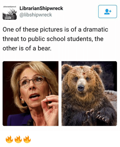 Memes and 🤖: tibrarians6ipwreck.  Librarian Shipwreck  Calibshipwreck  One of these pictures is of a dramatic  threat to public school students, the  other is of a bear. 🔥🔥🔥