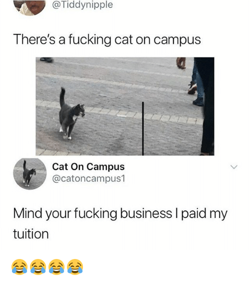 Fucking, Business, and Girl Memes: @Tiddynipple  There's a fucking cat on campus  Cat On Campus  @catoncampus1  Mind your fucking business l paid my  tuition 😂😂😂😂