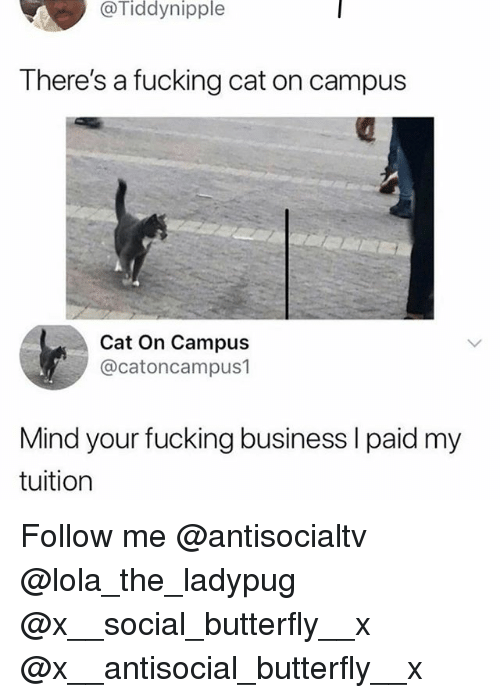 Fucking, Memes, and Business: @Tiddynipple  There's a fucking cat on campus  Cat On Campus  @catoncampus1  Mind your fucking business l paid my  tuition Follow me @antisocialtv @lola_the_ladypug @x__social_butterfly__x @x__antisocial_butterfly__x