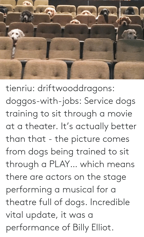 service: tienriu: driftwooddragons:  doggos-with-jobs: Service dogs training to sit through a movie at a theater. It's actually better than that - the picture comes from dogs being trained to sit through a PLAY… which means there are actors on the stage performing a musical for a theatre full of dogs.   Incredible vital update,  it was a performance of Billy Elliot.