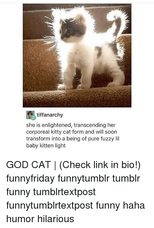˜»: tiffanarchy  she is enlightened, transcending her  corporeal kitty cat form and will soon  transform into a being of pure fuzzy Iil  baby kitten light GOD CAT   (Check link in bio!) funnyfriday funnytumblr tumblr funny tumblrtextpost funnytumblrtextpost funny haha humor hilarious