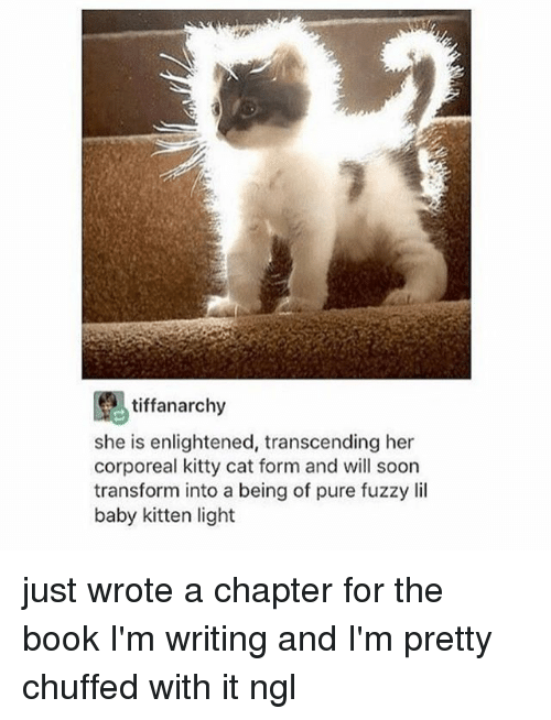 enlightened: tiffanarchy  she is enlightened, transcending her  corporeal kitty cat form and will soon  transform into a being of pure fuzzy lil  baby kitten light just wrote a chapter for the book I'm writing and I'm pretty chuffed with it ngl