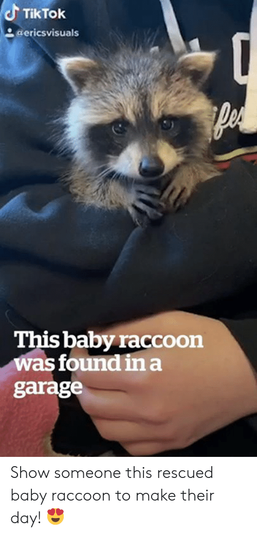 garage: TikTok  aericsvisuals  This baby raccoon  was found ina  garage Show someone this rescued baby raccoon to make their day! 😍