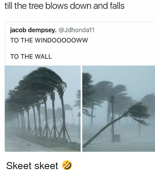Tree, Girl Memes, and The Wall: till the tree blows down and falls  jacob dempsey. @Jdhonda11  TO THE WINDOOOOOWW  TO THE WALL Skeet skeet 🤣